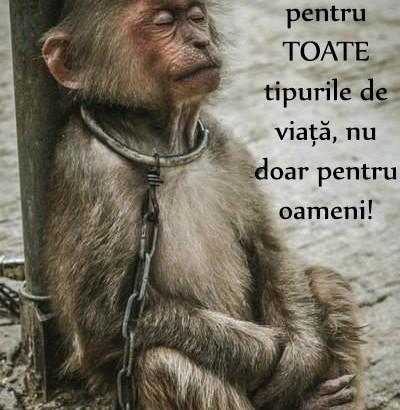 Iubiţi animalele!