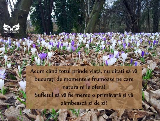 Primăvara a sosit!!!